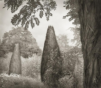 Trees, Hidcote, from the series In the Garden, platinum print, 16 x 18 1/2 inches