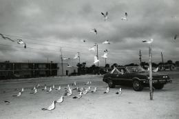 Seagulls, Florida 1984