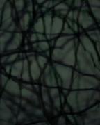 Dusk #56, 2005