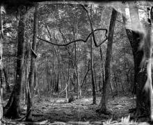 Biedler Forest 2010