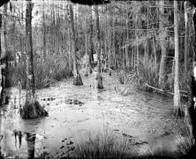 Swamp Water near Georgetown