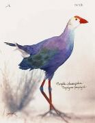 Laszlo Layton, Purple Swamphen, 2005,