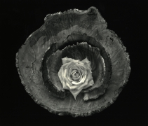 Rose Bowl, Cushing Maine, 2003, gelatin silver print