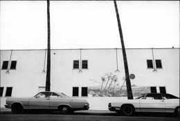 Terry Wild California Palms, Los Angeles, CA, 1970