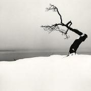 Michael Kenna, Kussharo Lake Tree, Study 5, Kotan, Hokkaido, Japan, 2007