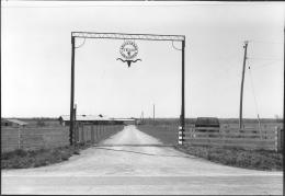 Registered Texas Longhorns Ranch Entrance, Kansas, 1981