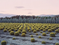 Cactus Nursery, Seley Ranch, Borrego Springs, CA