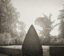 Yew, Hinton Ampner, from the series In the Garden, 2003, platinum print, 16 x 18 1/2 inches