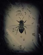 Apis Mellifera Scutellata(African Killer Bee), 2001/2002, Central Africa