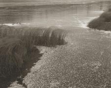 Winter Reeds, 1998