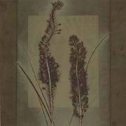 Botanical 07-15, 2007, photogenic drawing