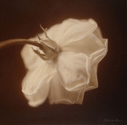 White Rose II, hand-colored gelatin silver print