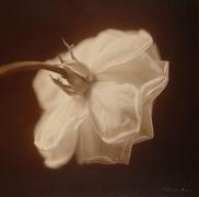 White Rose II, hand-colored gelatin silver print