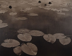 Floating Leaves II, Boundary Water, MN, 1999,