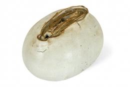 Organic Glazed Stoneware Sculpture