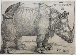 Albrecht Dürer, The Rhinoceros, 1515