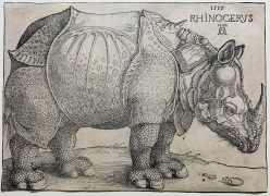 Albrecht Dürer, The Rhinoceros, 1515