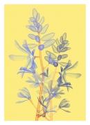 Klamath Basin Flowers Editions