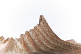 Annie Fourmanoir's ceramic bowl detailed view of ridges