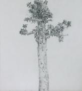 Arboretum, Piece 8