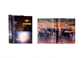 Peter Coffin Untitled (UFO/Elephants)