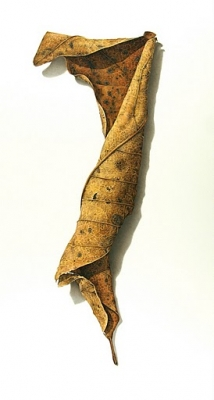 "The New-York Historical Society acquires DAVID MORRISON's ""Rusted Leaf No. 4"""