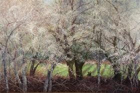 Hanson Gallery Fine Art welcomes Healdsburg artist Randolph Johnson