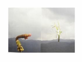 Avishek Sen, Untitled (diptych), 2014, collage on print, 17 x 25 in