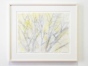 Sylvia Plimack Mangold: Winter Trees