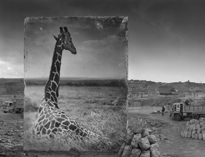Sublime Photos of African Wildlife Roaming Their Lost Habitat