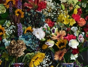 Flowers for Lisa: Abelardo Morell's Enduring Gift of Images