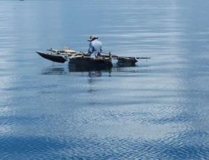 Wiley Fish & Fisheries