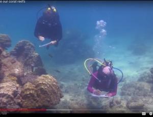 WCS Marine Conservation Program