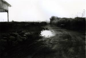 Exhibition: Daido Moriyama at Barbican Art Gallery