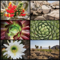 'Dana Buckley: Living Desert' Publication Released