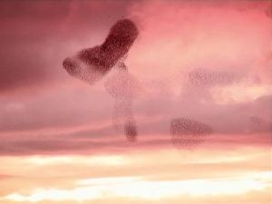 Laurent Grasso in Vers le Ciel