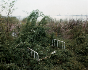 Alec Soth in Revealing Pictures: Photographs from the Christopher E. Olofson Collection
