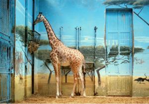 Candida Höfer in Animals & Us