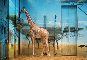 Candida Höfer in Animals in Art