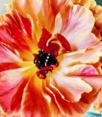 Art Out: Joel Grey's The Flower Whisperer