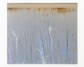 An double-image of sprigs of grass on Staten Island, in a periwinkle hue