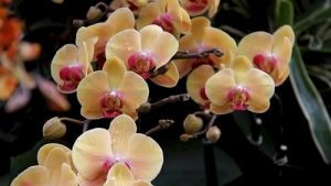 A video film still of orchids, yellow