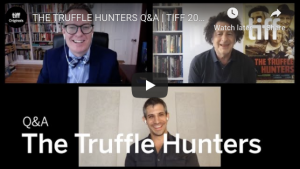 THE TRUFFLE HUNTERS Q&A | TIFF 2020