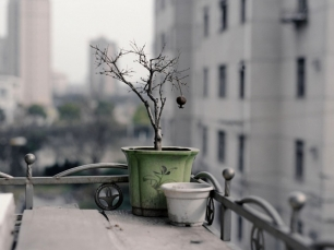 Still Life by Shen Wei