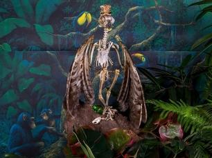 Bird skeleton by Rachel Stern