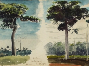 "Charles DeWolf Brownell  (1822 - 1909) Ceibus (Trop. Trees & Plants) 1859 Watercolor on Paper H 5.25"" x W 8.5"" Titled, Inscribed and Dated Bottom Center Edge Price Upon Request"