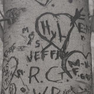 MARY REILLY: Graffiti Trees