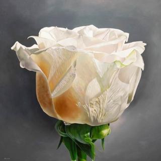 Begonia Martin