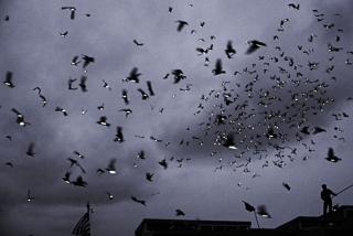 Huffington Post : Duke Riley Has Wings