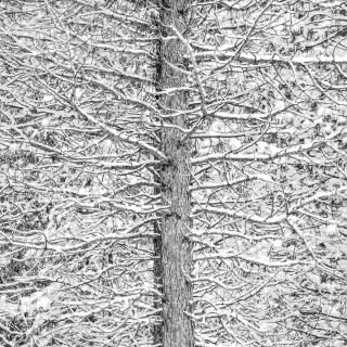 Tree and Snow Mosaic